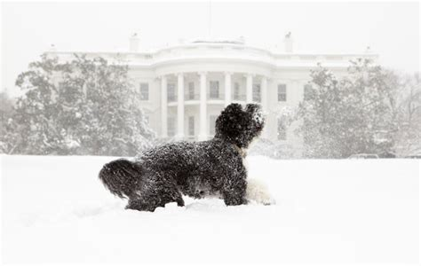 first dog white house dogs in the white house photos of presidential pets time com