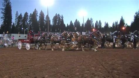 Draft Horse Classic Nevada County Fairgrounds Grass Classic Grass Valley Ca