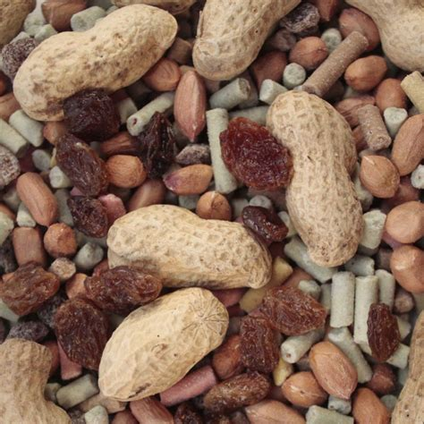 squirrel food british wild bird food and habitat suppliers