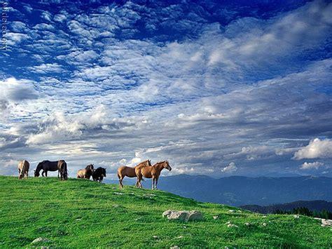 imagenes de paisajes y caballos paisajes con caballos imagui