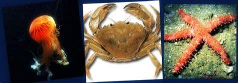 imagenes de animales moluscos moluscos y crust 225 ceos los amigos de los animales