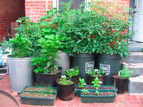 Vegetable Container Garden For More Organic Gardening Container Gardens Vegetables