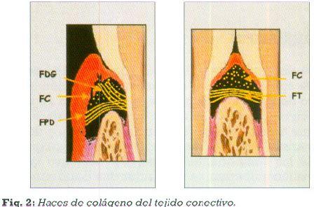si鑒e de r騏nion espacio biol 243 gico parte i la inserci 243 n diente enc 237 a