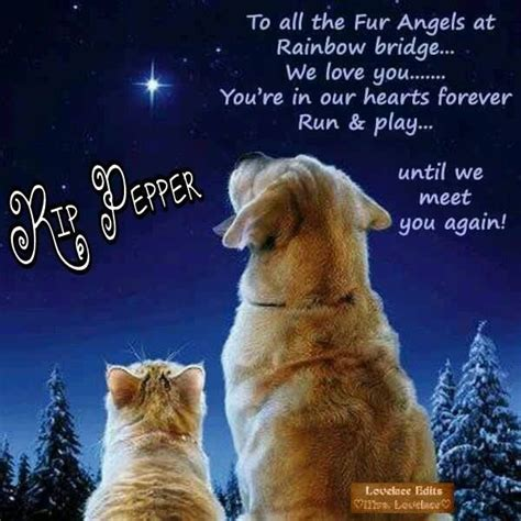 2219 best rainbow bridge images on quote 17 best images about rainbow bridge for beloved companions