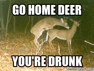 Deer Meme - drunk deer
