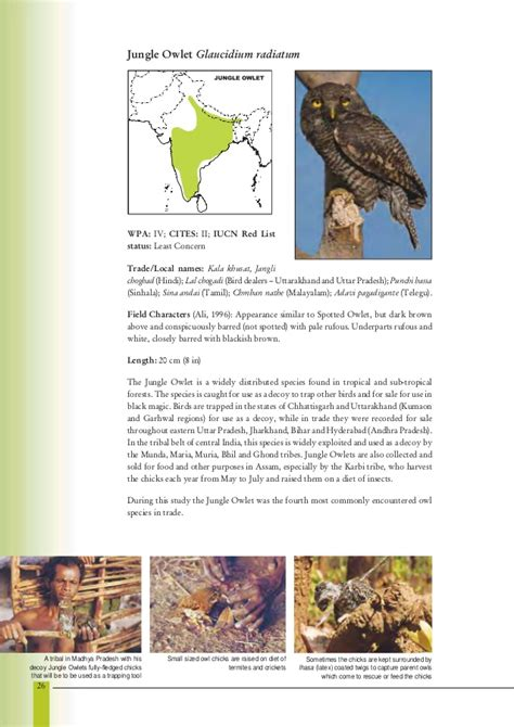 Essay On Different Types Of Birds In by Essay On Owl Bird In Language Docoments Ojazlink