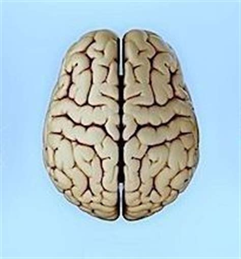 sclerosi multipla e mal di testa sclerosi multipla sintomi diagnosi cura e decorso