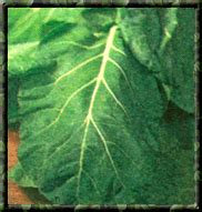 what to plant in summer vegetable garden what to plant in your summer vegetable garden organic