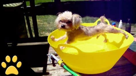 when can puppies get a bath hates bath time