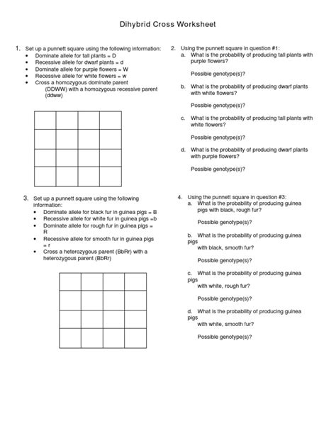 Dihybrid Cross Worksheet by Dihybrid Cross Worksheet Lesupercoin Printables Worksheets