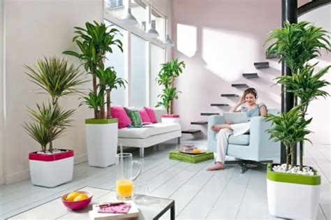 room with plants feng shui plants for harmony and positive energy in the
