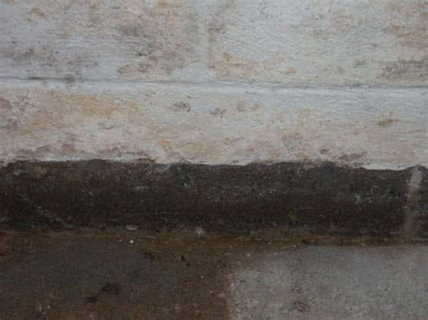 basement mold symptoms mold mildew in canton ohiogarrett basement waterproofing