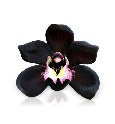 Black Orchid by Black Orchid Fragrance For Soap Candle Makers Shop