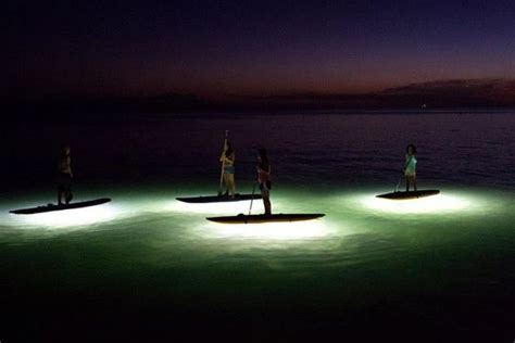 ops paddle board lights 25 best ideas about standup paddle board on