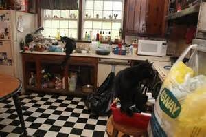 a pungent odor filled the room kid lived with farm animals in deplorable home ny daily news