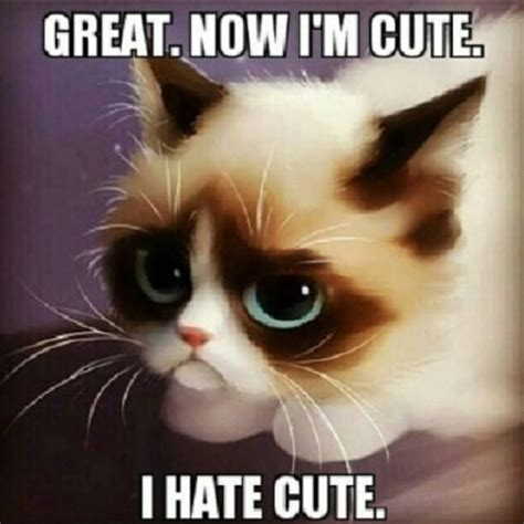 Meme Kitty - grumpy cat meme grumpy cat pictures and angry cat meme