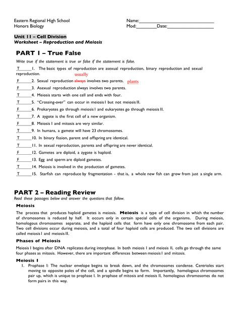 Chapter 13 Meiosis And Sexual Cycles Worksheet Answers worksheet 15 meiosis answer key kidz activities