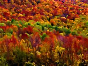 fall colors in vermont autumn colors drerayact
