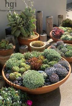 Shallow Planter For Succulents by 1000 Images About Succulent Bowls On