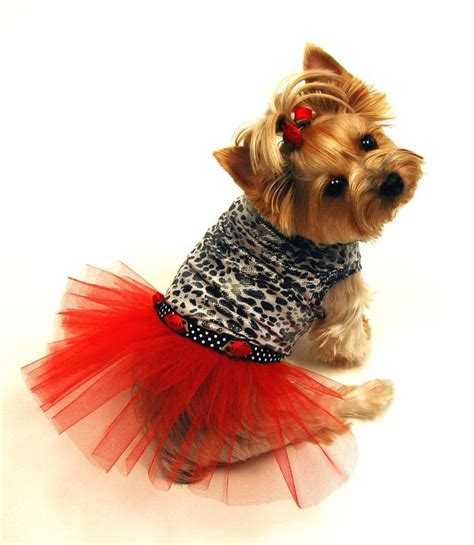 clothes for yorkies yorkie clothes clothing accessories and more breeds picture