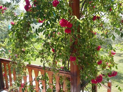 piante e fiori da terrazzo piante profumate in balcone piante appartamento quali