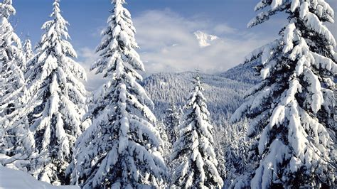 snow in the pines desktop background hd 1920x1080 deskbg com