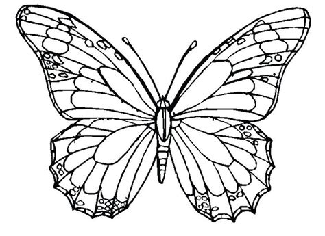 Six Butterfly Adult Coloring Pages Printable Coloring Butterfly Cycle Coloring Page