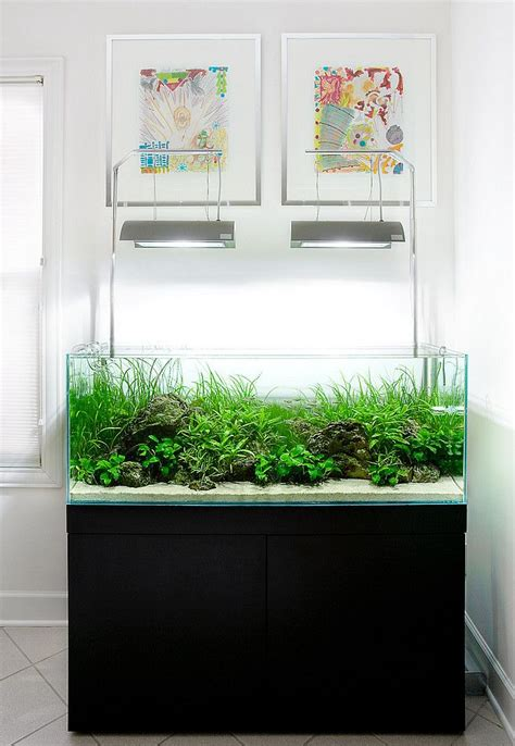aquarium design group goldfish aquarium design group aquarium designs pinterest