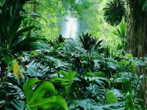 Plants In Tropical Rainforests - rainforest plants and animals wallpaper