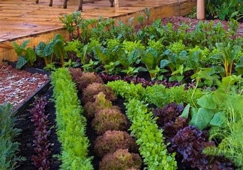 Small Veg Garden Ideas Small Vegetable Garden Ideas How To Plan And Design Them