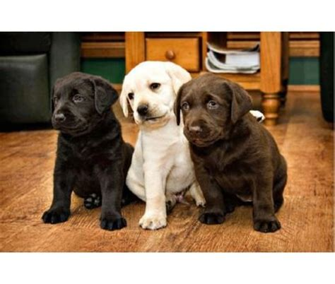 barnes puppy kennels 17 best images about pet adoption centers and breeders on