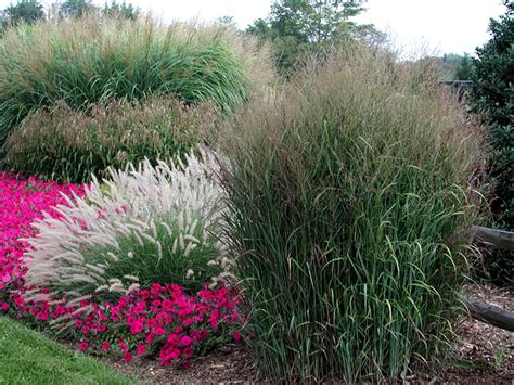 Ornamental Grasses Grass Garden Design