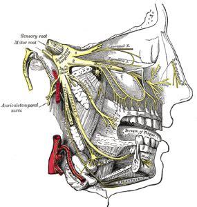 mal di testa da tre giorni a caccia di mal di testa i tipi di mal di testa pi 249 diffusi