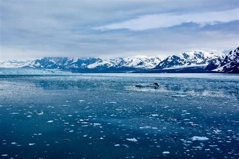 arctic sea five reasons why the speed of arctic sea loss matters
