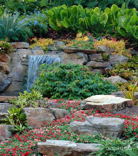Tropical Rock Garden Tropical Rock Garden By Moulder