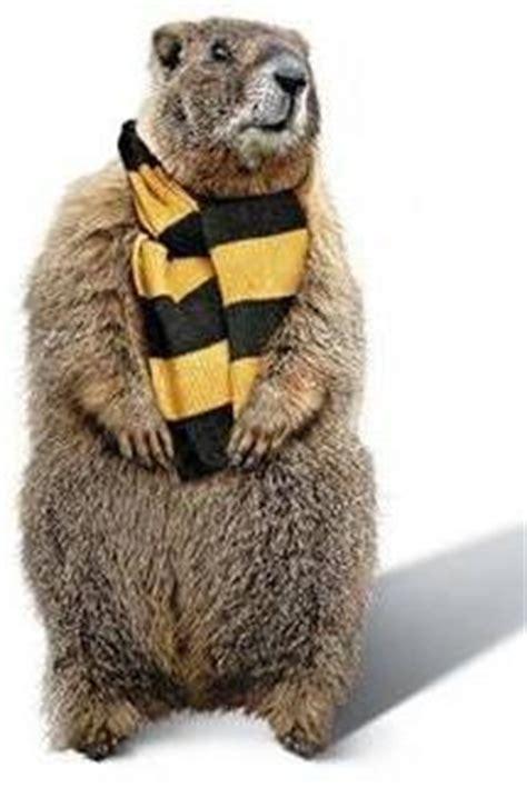 groundhog day karma 215 best groundhog day punxsutawney phil images on