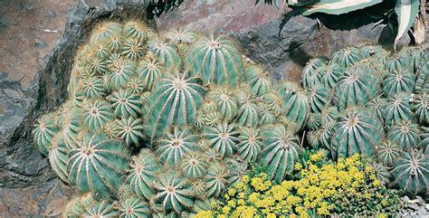 piante da interno resistenti piante da interno resistenti cura e coltivazione indoor