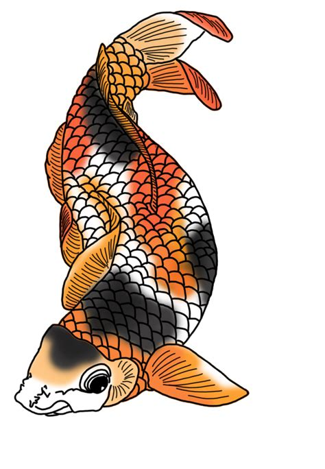 koi fish drawing color colorful koi fish drawings