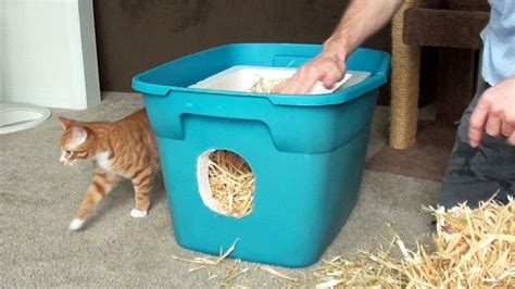 how to a feral how to build a feral cat shelter pawbuzz