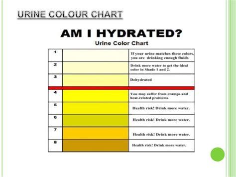 urine smells like ammonia characteristics of urine