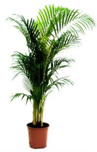 Home Plant 10 Air Purifying Plants For Homes Amp Offices Webecoist