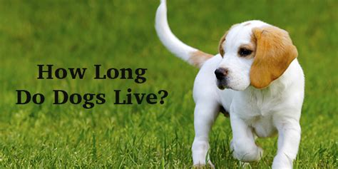 how can dogs live how do dogs live a complete guide to canine span the happy puppy site