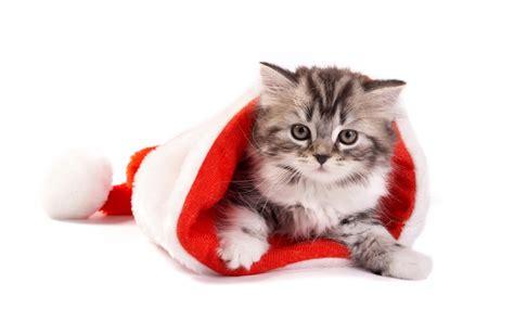 wallpaper chat humour chapeaux de no 235 l dans un petit chat chaton mignon de