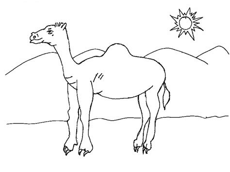 Free Printable Camel Coloring Pages For Kids Animal Place Camel Coloring Page
