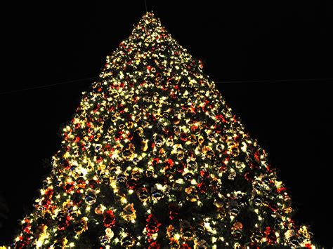christmas tree competition introduced to encourage area