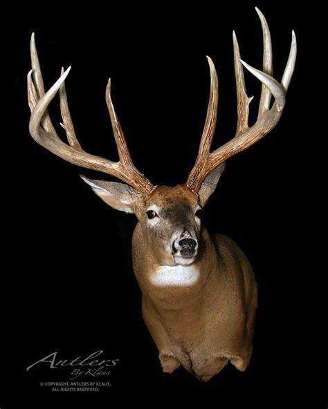 World Record Deer Rack by Brad Jerman Buck Antlers By Klaus