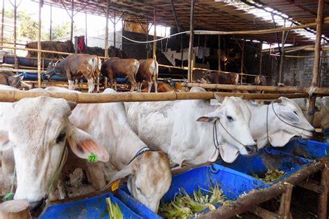 Daftar Bibit Sapi Potong daftar lengkap harga sapi potong terbaru april 2014 kliping agribisnis indonesia