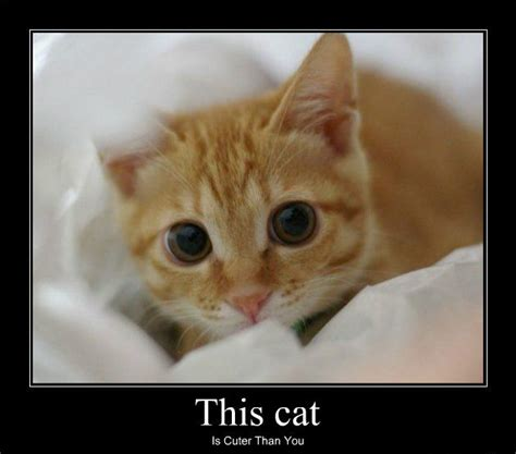 Thank You Cat Meme - thank you kitten meme www pixshark com images