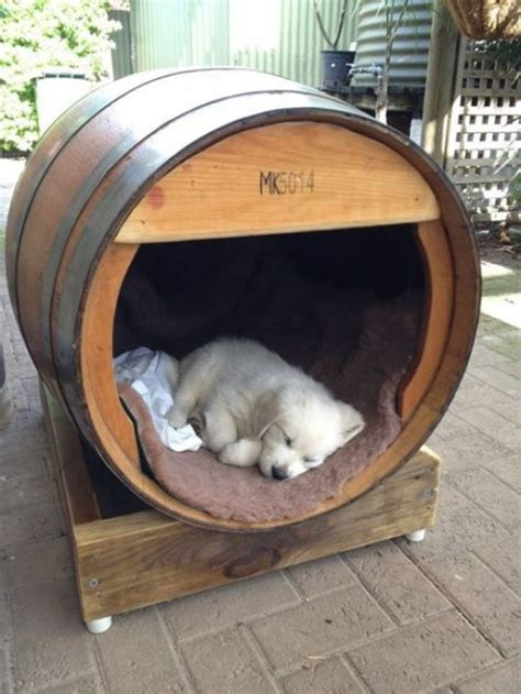 pictures of house dogs barrel dog house pictures
