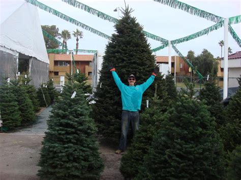top spots for buying christmas trees in las vegas 171 cbs